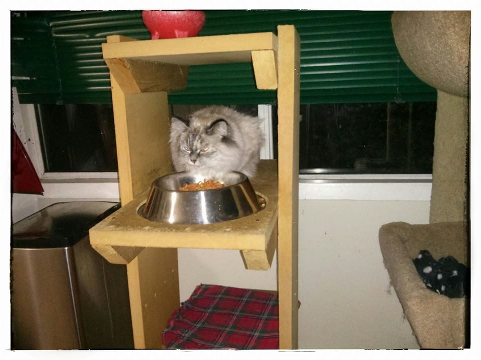 Do Cats Like Eating The Same Food Everyday